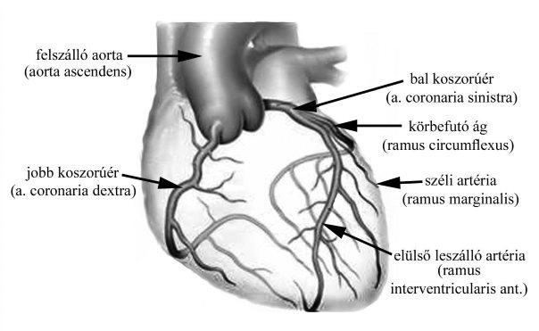 a nyak és a fej erek magas vérnyomásban mi a hipertónia betegsége