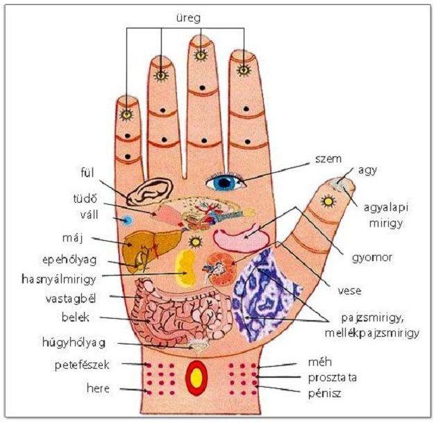 Endokrinológia és Nőgyógyászati endokrinológia - Szegi Medical Center