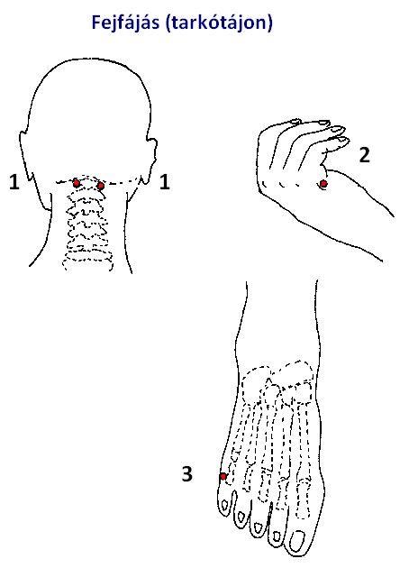 Nyirokmasszázs, Pióca kezelés, Kineziológia - Puja Mária - NyirokCentrum
