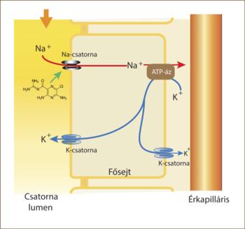 diuretikumok hatásmechanizmusa magas vérnyomás esetén