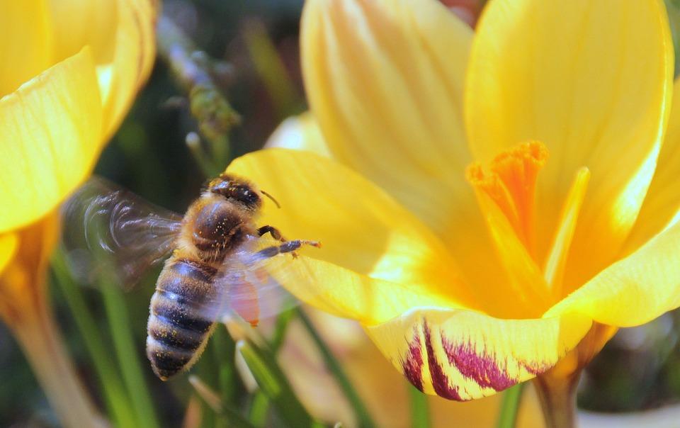 mezei méh és magas vérnyomás a magas vérnyomás jellemzői idős korban