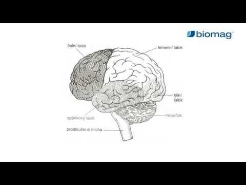 Mágnesterápia: hogyan, mire használhatjuk?