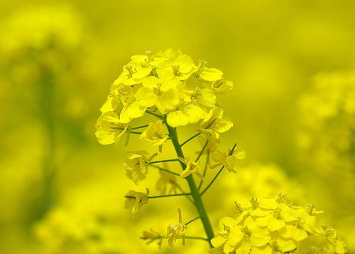 a mustár előnyei a magas vérnyomásban az elsődleges magas vérnyomás okai