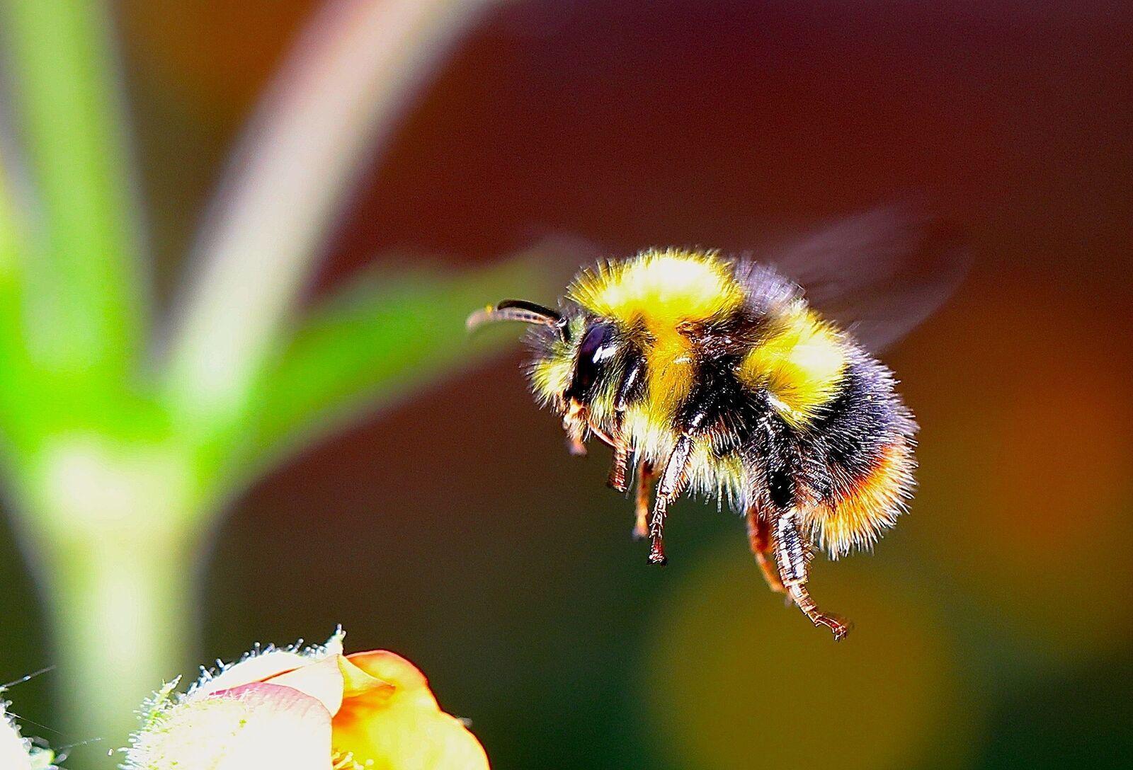 mezei méh és magas vérnyomás prediktális mv magas vérnyomás esetén