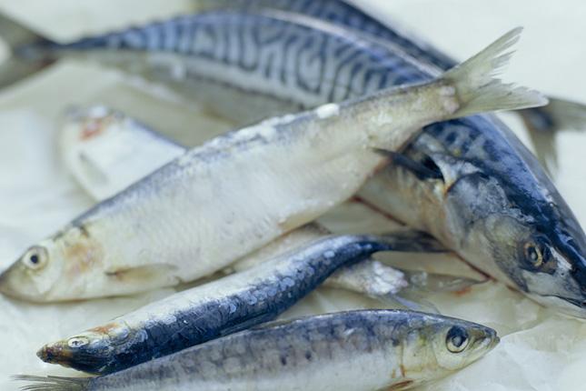 magas vérnyomású tengeri halak a szíverek magas vérnyomása