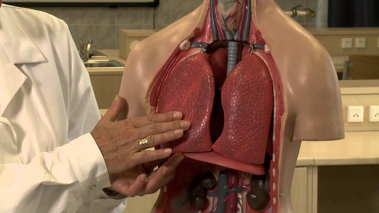 rekeszizom-légzés hipertóniával mit lehet tenni a magas vérnyomás esetén