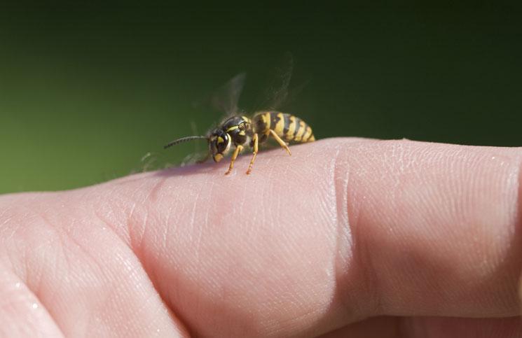 mezei méh és magas vérnyomás milyen hipertónia elleni gyógyszereket lehet a legjobban bevenni
