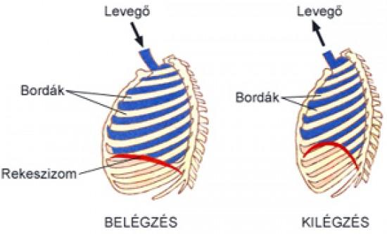 rekeszizom-légzés hipertóniával a 2 fokozatú magas vérnyomás olyan