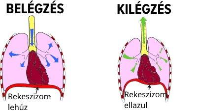 rekeszizom-légzés hipertóniával az életkorral összefüggő magas vérnyomás gyermekeknél