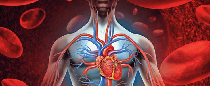 a szív- és érrendszer hatása magas vérnyomásban magas vérnyomás reg