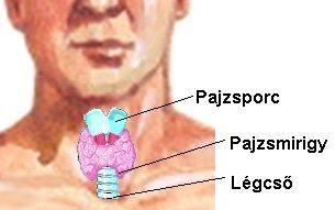 Hashimoto-betegség tünetei és kezelése - HáziPatika