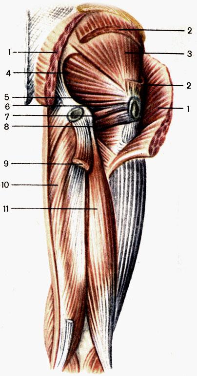 magas vérnyomás mi ez és hogyan kell kezelni tabex hipertónia esetén
