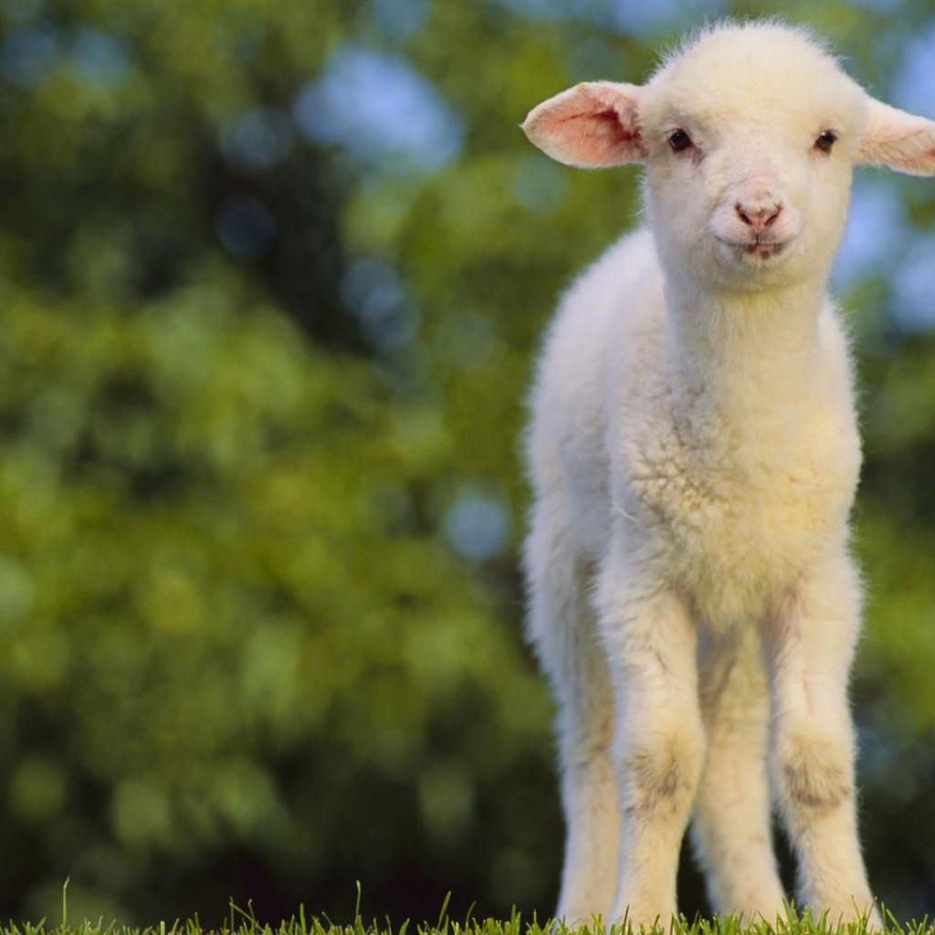 lehetséges-e enni bárányt magas vérnyomásban kettős látás magas vérnyomással