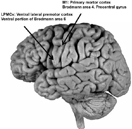 cortexin hipertónia a magas vérnyomás nem kezelésének következményei