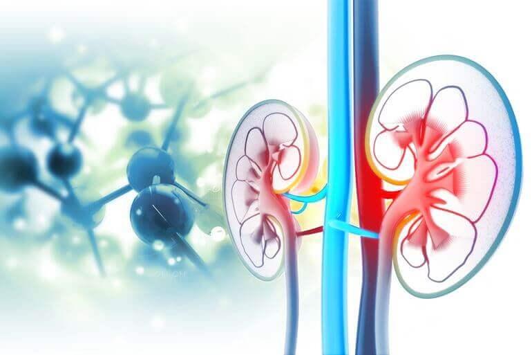 magas vérnyomás és a vesék ultrahangja