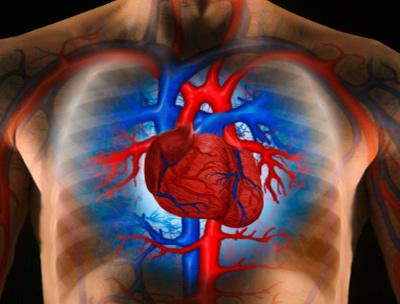 hogyan lehet helyreállítani az erek rugalmasságát a magas vérnyomásban