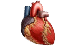 pacemaker és magas vérnyomás