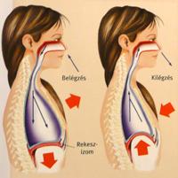 rekeszizom-légzés hipertóniával magas vérnyomás ciklikus koplalás
