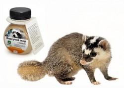 Badger zsír - használja a gyermekek és felnőttek, gyógyászati tulajdonságai