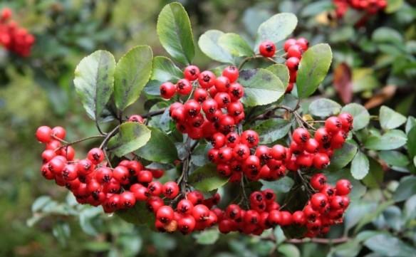 növények magas vérnyomás