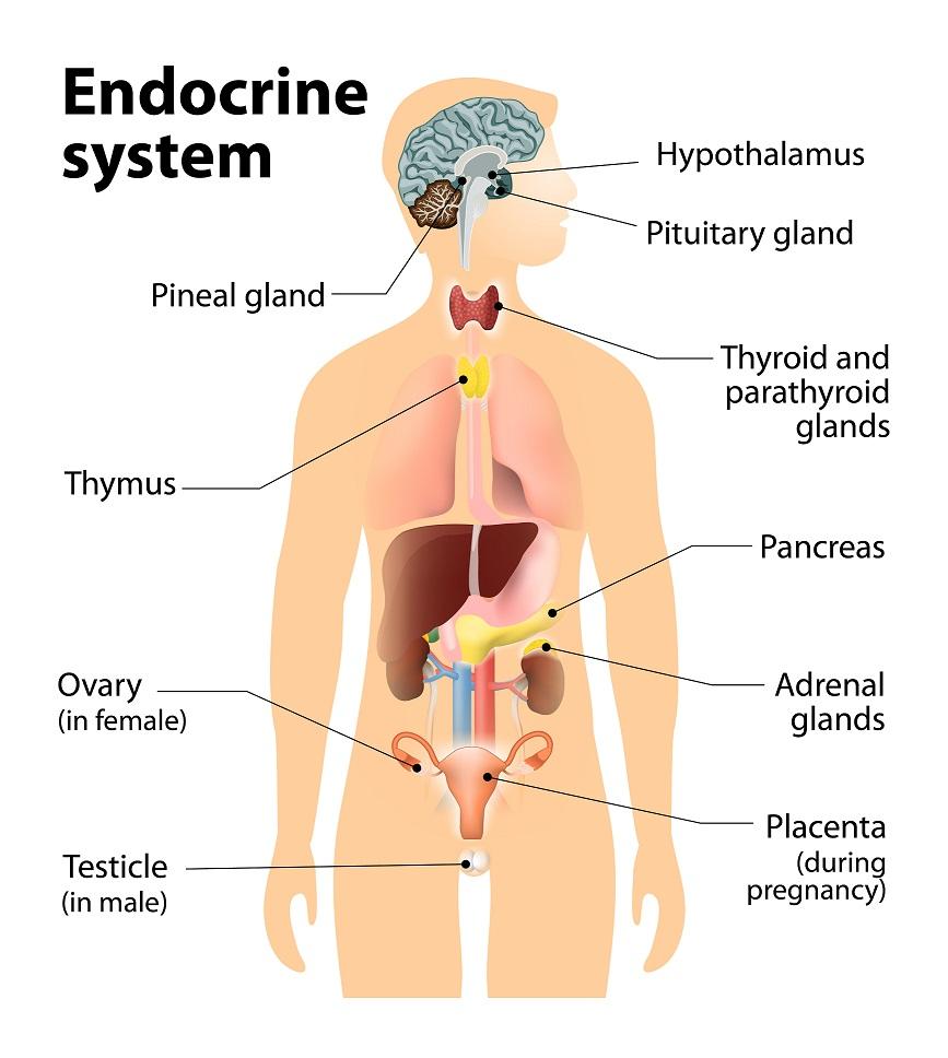 Prolaktin-túltermelés és prolaktinhiány tünetei és kezelése