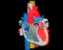 a gerinc hipertóniával való összekapcsolása masszázs a magas vérnyomásért videó