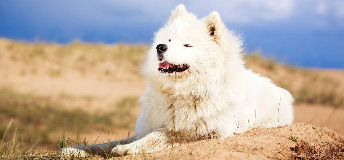 Krónikus kalcium antagonista kezelés hatása kutya szívizom kalcium-homeosztázisára