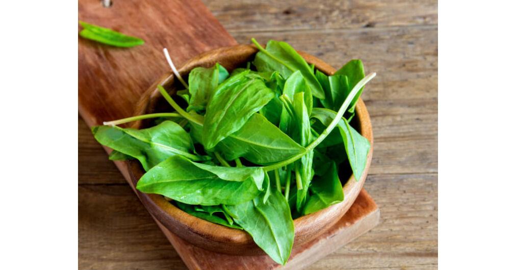Sóska a zöld gyógyító - Egészségtér